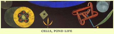 cells, pond life