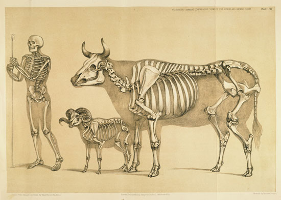 A Comparative View of the Human and Animal Frame, Benjamin Waterhouse Hawkins