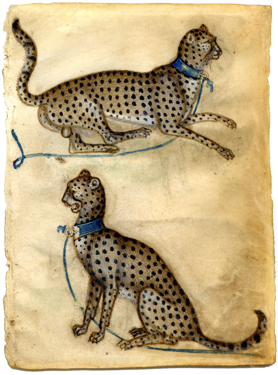 Giovannino de'Grassi, study of cheetahs